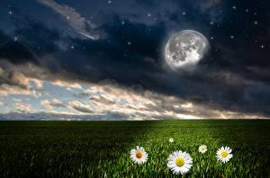 Фотографии Пейзаж Поля Небо Ромашки Звезды Ночные Луна Облака Природа