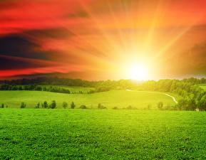 Картинка Пейзаж Рассветы и закаты Поля Небо Трава Солнце Природа