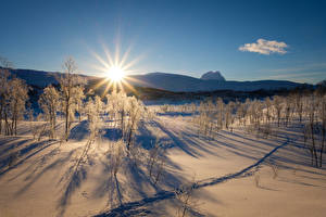 Фотография Пейзаж Рассветы и закаты Зима Снег Солнце Деревья Природа