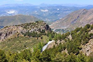 Фотографии Испания Горы Парки Ель Деревья Sierra Nevada National Park Природа