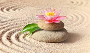 Фотографии Камень Водяные лилии Песок zen