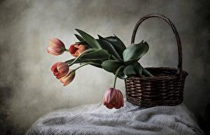 Фотография Тюльпаны Корзина