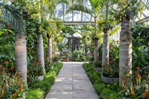 Фотография Штаты Сады Чикаго город Пальмы Кусты Chicago Botanic Garden Природа