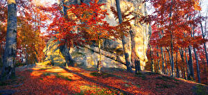 Фото Украина Осень Лес Закарпатье Деревья Утес Ствол дерева Листья Природа