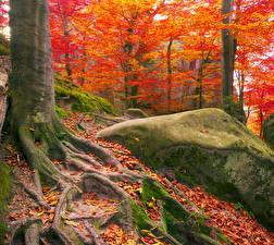 Фотография Украина Леса Осенние Камень Закарпатье Ствол дерева Мох