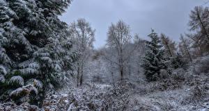 Обои Великобритания Зимние Леса Снег Ель Yorkshire