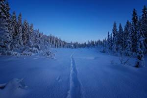 Обои Зима Леса Вечер Снег Ель Природа