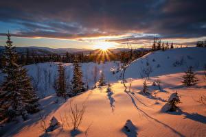 Картинка Зимние Рассветы и закаты Снег Ель Лучи света Природа