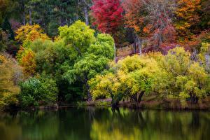Картинка Австралия Парки Осенние Пруд Дерево Mount Lofty Botanic Garden Природа