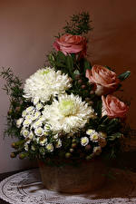 Картинки Букет Хризантемы Розы Цветы