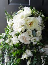 Обои Букеты Розы Белый Цветы
