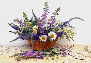 Фото Ромашки Колокольчики - Цветы Люпин Корзинка Цветы