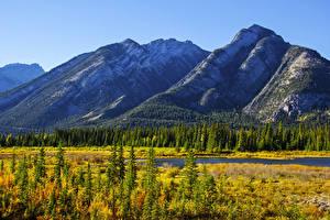 Обои для рабочего стола Канада Парки Горы Осенние Банф Ель Трава Природа