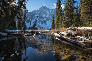 Обои Канада Парки Зима Горы Озеро Банф Ель Бревна Снег