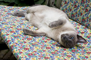 Картинки Кошки Смотрит