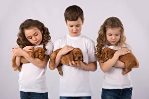 Фотографии Собаки Цветной фон Втроем Мальчики Девочки Щенок Ребёнок