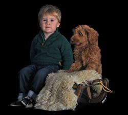 Картинка Собаки Черный фон Мальчики Сидит Взгляд Labradoodle Дети Животные