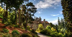 Фотография Англия Дома Особняк Ель Кусты Cragside