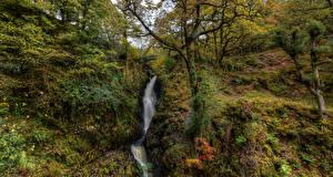 Фотография Англия Водопады Утес Деревья Мох Dockray Природа