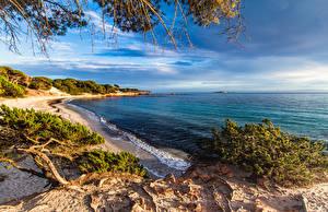 Фотографии Франция Берег Волны Кустов Corsica Природа