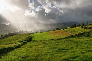 Фотография Франция Луга Корова Трава Mont Saint-Michel