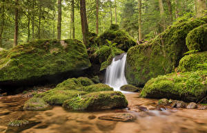 Фото Германия Леса Камень Водопады Мох Gertelbach waterfalls Природа