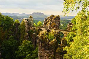Обои Германия Парки Мосты Утес Деревья Мох Saxon Switzerland National Park Природа