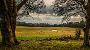 Картинка Ирландия Луга Ствол дерева County Down Природа