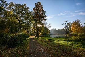 Картинки Нидерланды Парки Осень Деревья Кусты Лучи света Листья Castle De Haar park Природа