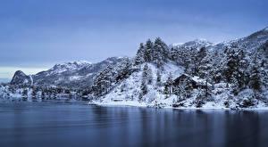 Фотография Норвегия Лофотенские острова Горы Зима Берег Снег Деревья