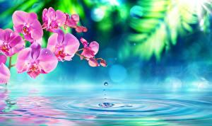 Обои Орхидеи Вода Цветы