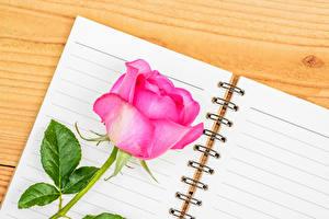 Фотография Розы Вблизи Доски Розовый Блокнот Цветы
