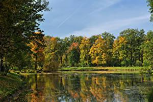 Фотографии Россия Санкт-Петербург Парки Осенние Озеро Деревья