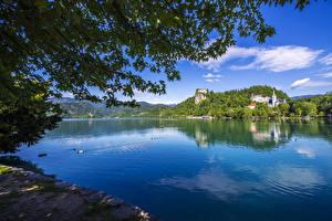 Фото Словения Озеро Утки Ветвь Lake Bled Природа