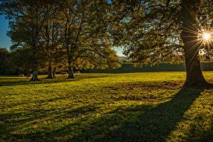 Фото Испания Луга Рассветы и закаты Деревья Лучи света Navarra Природа