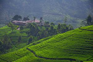 Фотографии Шри-Ланка Пейзаж Поля Дома Холм Дерево Природа