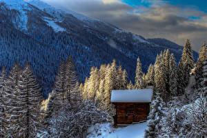 Фото Швейцария Горы Леса Зима Здания Альпы Ель Снег Agina Goms