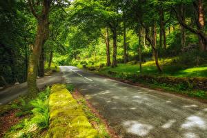 Фотография Швейцария Парки Дороги Деревья Мох Hilterfingen Canton of Berne