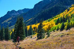 Фото Штаты Гора Леса Осень Ели Colorado Природа Девушки