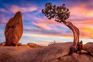 Фотография Штаты Парки Небо Камень Калифорния Деревья Joshua Tree National Park Природа