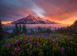 Фотография Штаты Пейзаж Горы Рассветы и закаты Вашингтон Ель Mount Rainier Природа