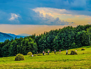 Фотографии Украина Леса Луга Закарпатье Сено Природа