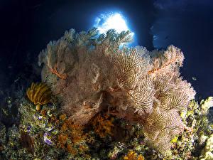 Фото Подводный мир Кораллы