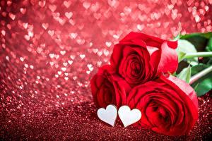 Картинка День всех влюблённых Розы Крупным планом Красный Три Сердце цветок