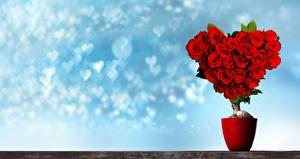 Фотографии День всех влюблённых Розы Дизайн Сердечко Красный Цветы