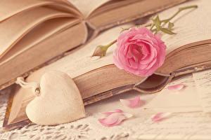 Фотография День святого Валентина Розы Розовый Сердечко Книга Лепестки Цветы