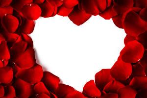 Обои День всех влюблённых Шаблон поздравительной открытки Лепестки Красный Сердце Цветы