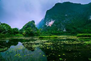 Картинки Вьетнам Речка Леса Утес Природа