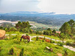 Фотографии Вьетнам Пейзаж Луга Лошади Поля Холмы Деревья Природа