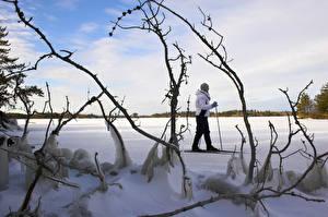 Картинка Зима Лыжный спорт Снег Ветки Природа
